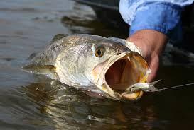 The Best Of North Carolina Summer Saltwater Fishing