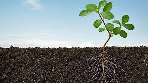 can healthy soil fix our planet mother nature network plant roots