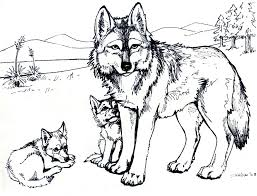 Small Picture Coloring Pages Wolf Animal Coloring Pages Realistic Wolf Coloring