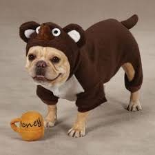 nibbler dog costume. zack \u0026 zoey lil\u0027 honey bear dog halloween costume miles is going to love this year. nibbler