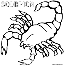 Small Picture Scorpion Coloring Pages New Coloring Page glumme