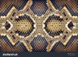 Python Pattern Enchanting Pattern Python Skin Stock Photo Edit Now 48 Shutterstock