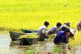 เกษตรกรเช็คด่วน! ขั้นตอนก่อนรับเงินเยียวยา 1.5 หมื่นบาท สยามรัฐ