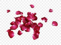 Petal Rose Flower Image Red Png 750x600px Petal Chart