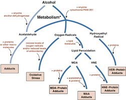 Alcohol Metabolism Chart Dangerous Byproducts Of Alcohol Breakdown