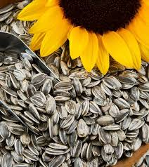 579 34 amazing benefits of sunflower seeds surajmukhi ke beej for skin hair