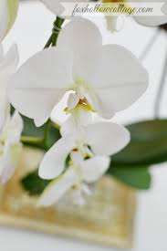 day orchid decor: white orchid flower white orchid flower white orchid flower