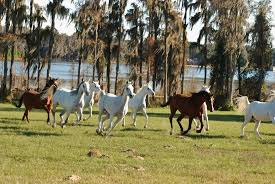 Dream Catchers Horse Ranch DreamCatcher Horse Ranch and Rescue Clermont All You Need to 35