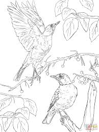 Small Picture Two American Robins coloring page Free Printable Coloring Pages