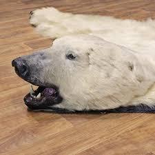 polar bear taxidermy rug 12330 for the taxidermy