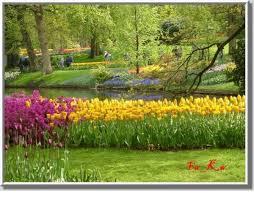 أجمل حدائق الورود,حدائق من الورود,مدينة الورد,دنيا الأزهار,عالم الورود,زهور بكل الألوا images?q=tbn:ANd9GcS