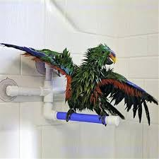 bird shower parrot bath shower standing platform rack parrot standing shower perch parakeet bird toy pet