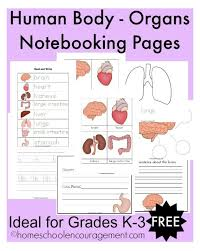 http://encouragingmomsathome.com/human-body-organ-notebooking ...