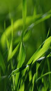 green leaves iphone 5 wallpaper hd