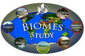 What Are Biomes 6 Major Biomes