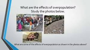 essay on overpopulation outline  essay on overpopulation outline