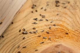 Small Brown Beetle In Bedroom Similiar Tiny Wood Bugs Keywords