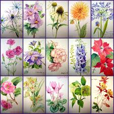 easy flowers paint mypaintings 10 new the watercolor flower painter s a z by adelene fletcher