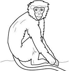 Babbuino Scimmia Disegno Da Colorare Gratis Per Bambini Disegni Da