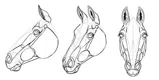 horse head drawing. Perfect Head Howtodrawhorseshead30 Inside Horse Head Drawing T