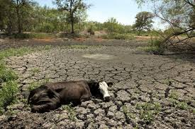 lots you didn t know about the ca drought and what you can do to  time to talk about the water crisis we ve had a drought for a few years now and it isn t getting better most of us don t think about