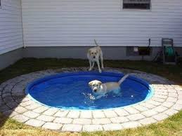 keep your dog cool with these diy dog pool ideas