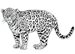 cheetah coloring pictures. Delighful Coloring Coloring Pages Of Cheetahs Cheetah Page  For Toddlers Colouring To Pictures C