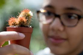 district resident evin blaner 12 inspects a cactus at behnke nurseries in beltsville md after 89 years the garden center is closing