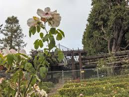 berkeley rose garden 14
