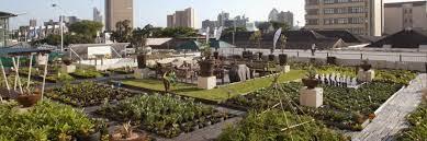 urban gardening the rooftop gardens of