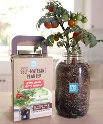oakland based startup business back to the roots came up with a genius idea a self watering planter inspired by an ancient and low tech technology that