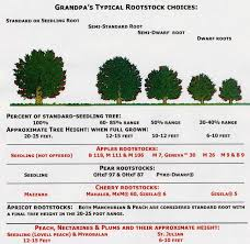 Rootstocks And Tree Spacing Made Simple