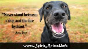 Funny Dog Quotes Gorgeous Funny Dog Quotes