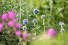 for most gardeners assembling a bouquet of flowers is a great pleasure walking through the garden selecting blooms we get to appreciate the plants in a
