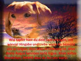 Schöne Sprüche Tod Hund Italiaansinschoonhoven