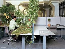 Next office desk Dresser Office Worker At Desk Covered In Plants While Next Desk Has Small Potted Plant Stock Buy Direct Online Office Worker At Desk Covered In Plants While Next Desk Has Small