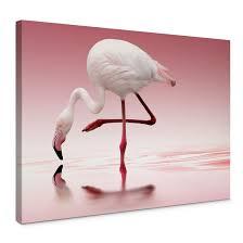 reindl pink flamingo canvas print