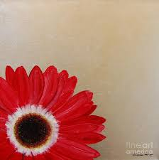 flower painting red gerbera daisy on silver leaf by michele harps