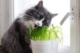 cat plants cat safe plants