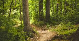 Image result for in the woods