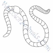 Portfolio worm coloring pages superior apple page free printable realistic coloring pages the earthworm earthworms coloring pages free Worm Coloring Pages