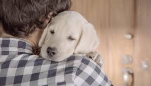 Bud Light Dog Driving Commercial Ad Of The Day Budweiser Makes The Cutest Dont Drink And