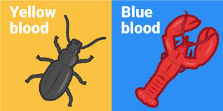 Animal blood comes in 5 <b>crazy colors</b> - Business Insider