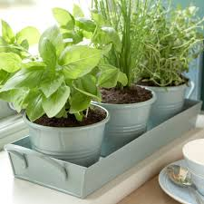 Kitchen Herb Garden Planter Indoor Herb Garden Pots 11 Indoor Herb Garden Ideas Kitchen Herb