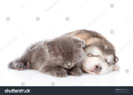 kittens and puppies sleeping.  Puppies For Kittens And Puppies Sleeping E