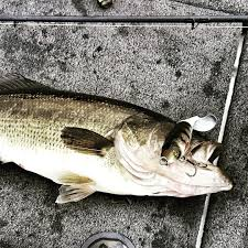 Whopper Plopper Central Our Complete Guide To Fishing This