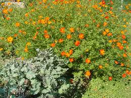 louisa s gardening essay wylie house museum mvc 018s ldquo
