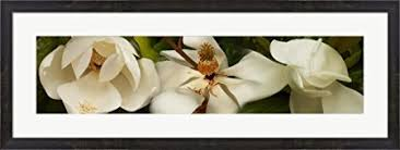 get quotations close up of white magnolia flowers by panoramic images canvas art wall picture museum on white magnolia wall art with cheap magnolia wall art find magnolia wall art deals on line at