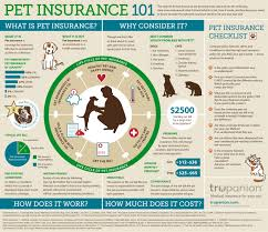 infographic pet insurance nutritional wellness s now