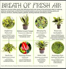 Good Indoor House Plants Good Indoor Plants The Top House Plants That Clean  The Air Best